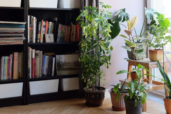 How To Decorate A Bookshelf: <br>Perfect Your Shelfie Game
