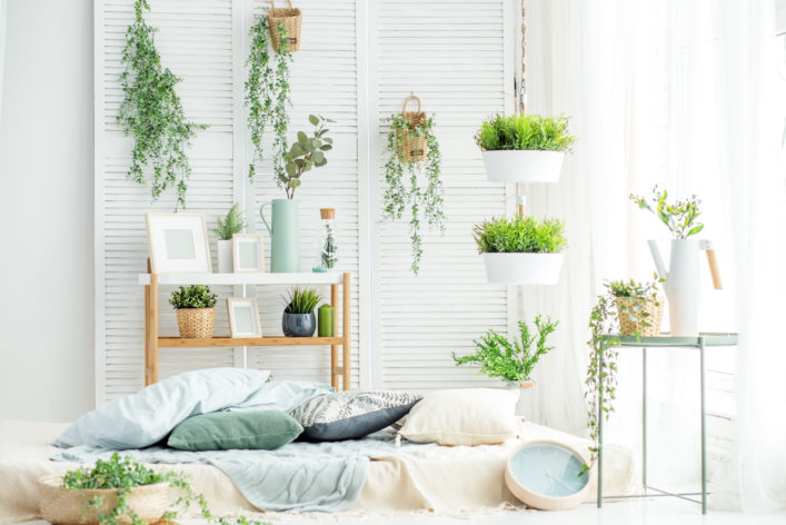 Decorating with Plants – It's Good for the Soul